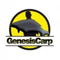 Genesis Carp